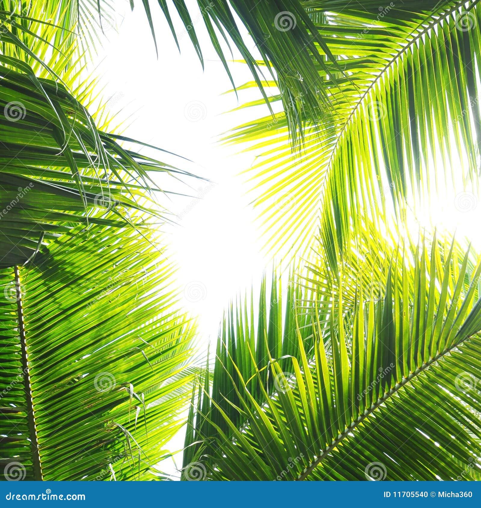 De Wildernis van de palm