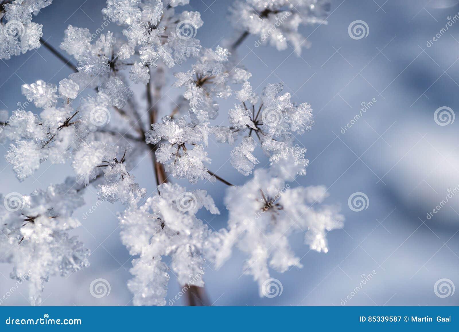 De winter bevroren achtergrond in aard, het bevriezen kristallen op gras, macrofotografie