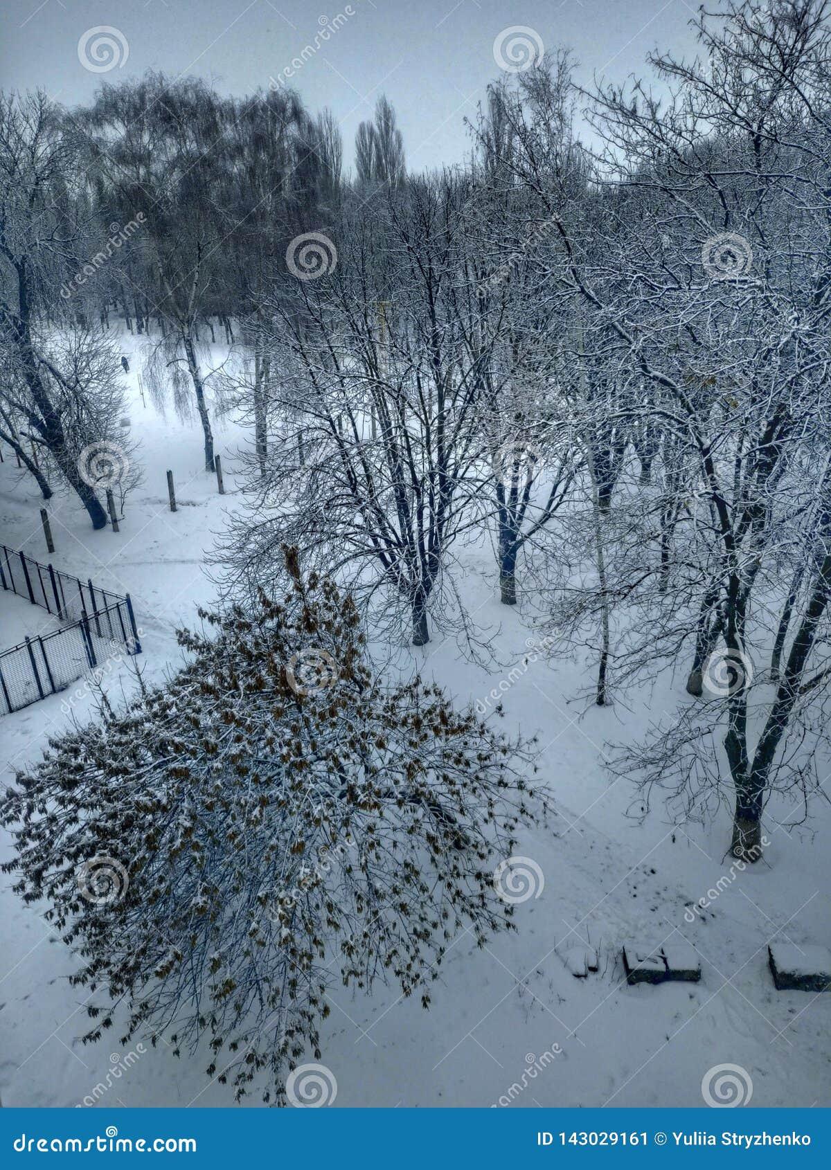 De winter De bomen zijn behandeld met sneeuw Witte sneeuw