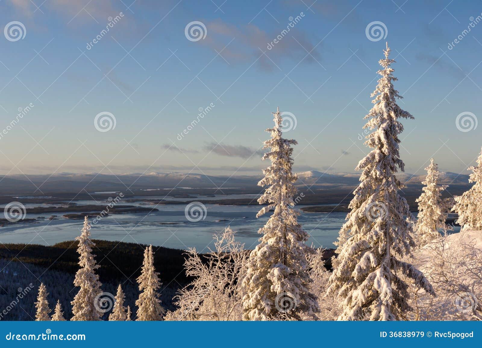De winter boslandschap, Kola Peninsula, Rusland