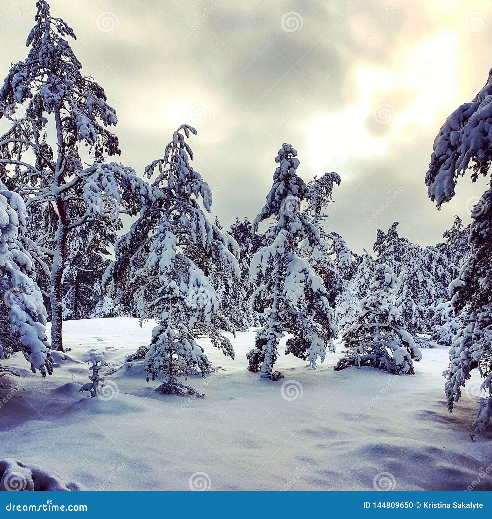 De winter is gekomen