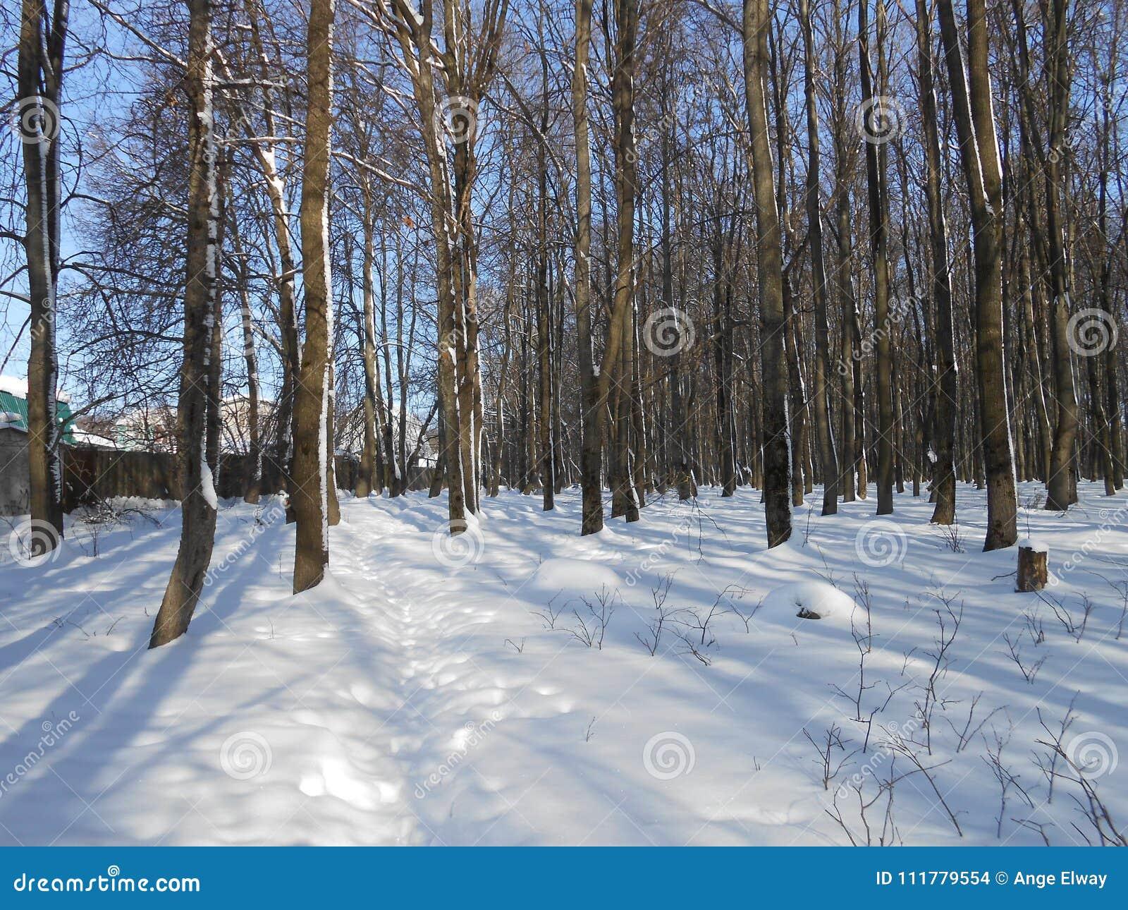 De winter in het eiken bosje