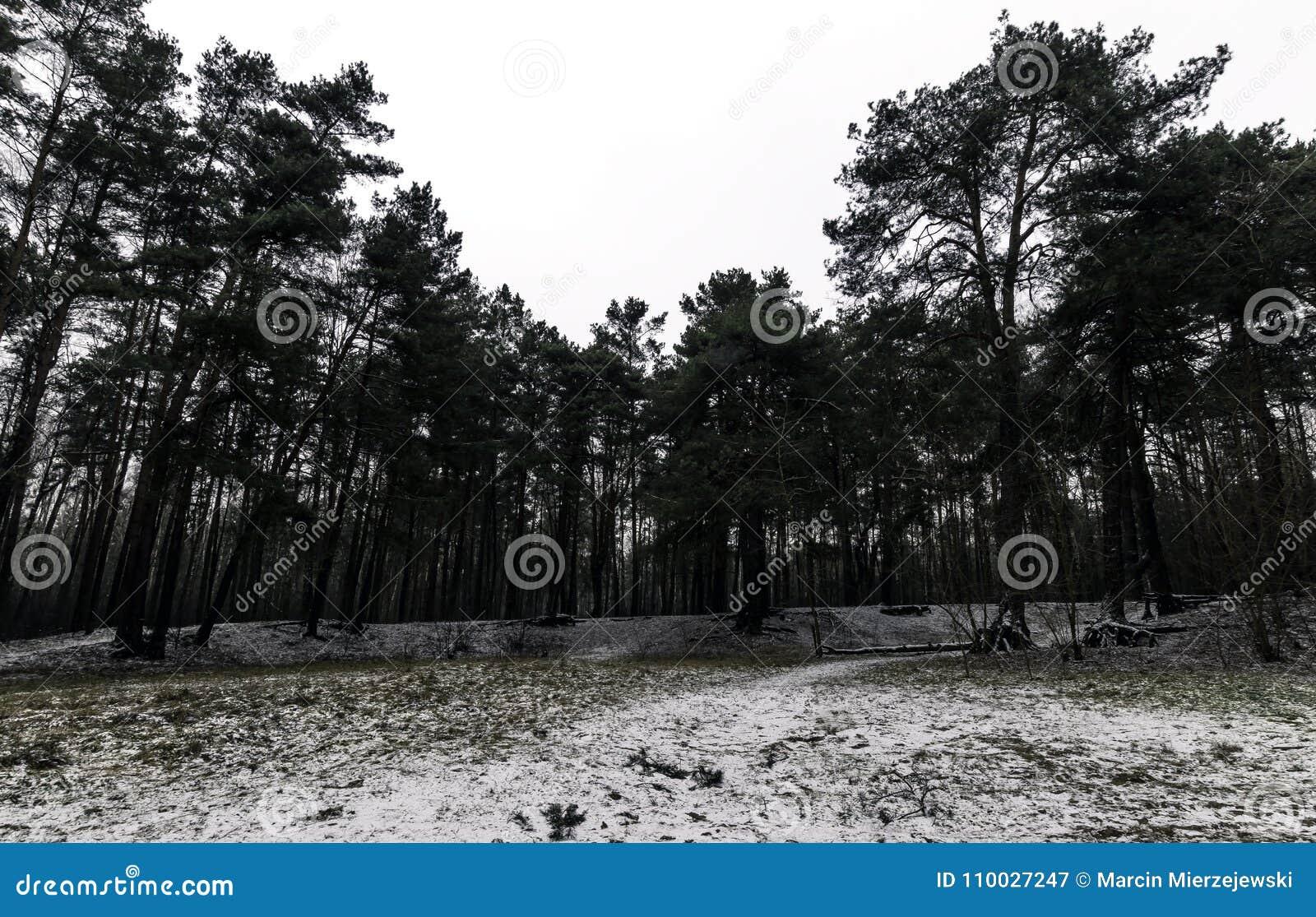 De winter in het Nationale Park van Kampinos