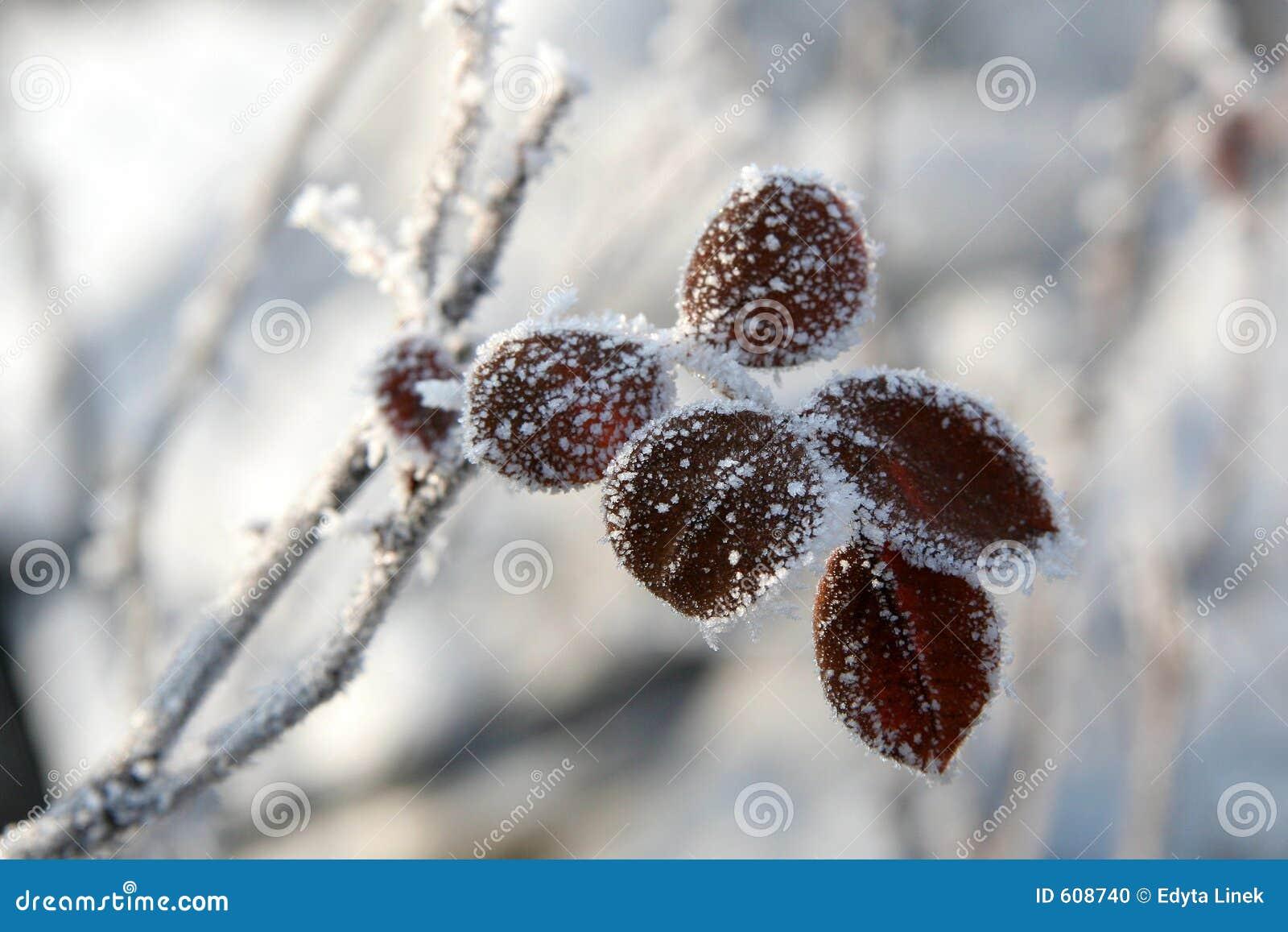 De winter nam toe