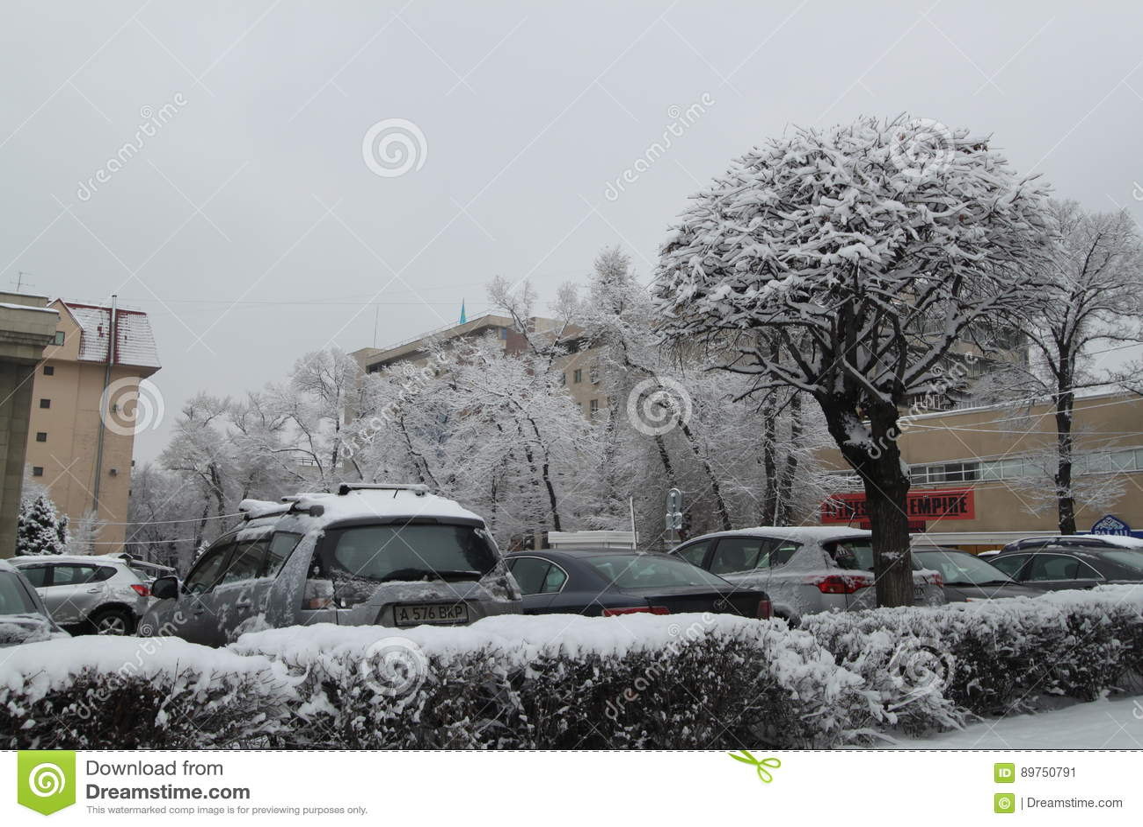 De winter, sneeuw op de omheinings fnd boom