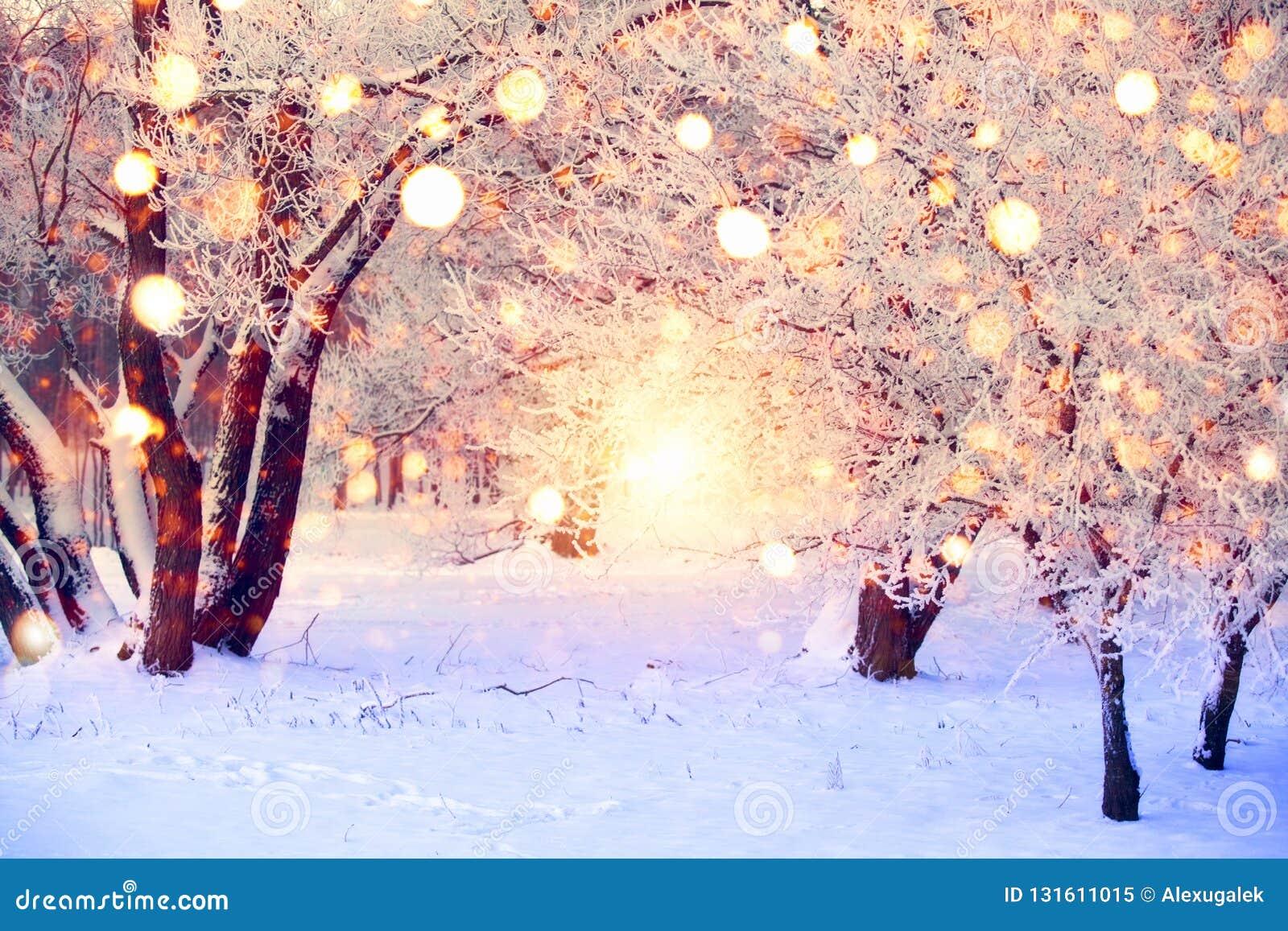 De winterbos met kleurrijke sneeuwvlokken Sneeuw behandelde bomen met Kerstmislichten De achtergrond van het Kerstmissprookjeslan
