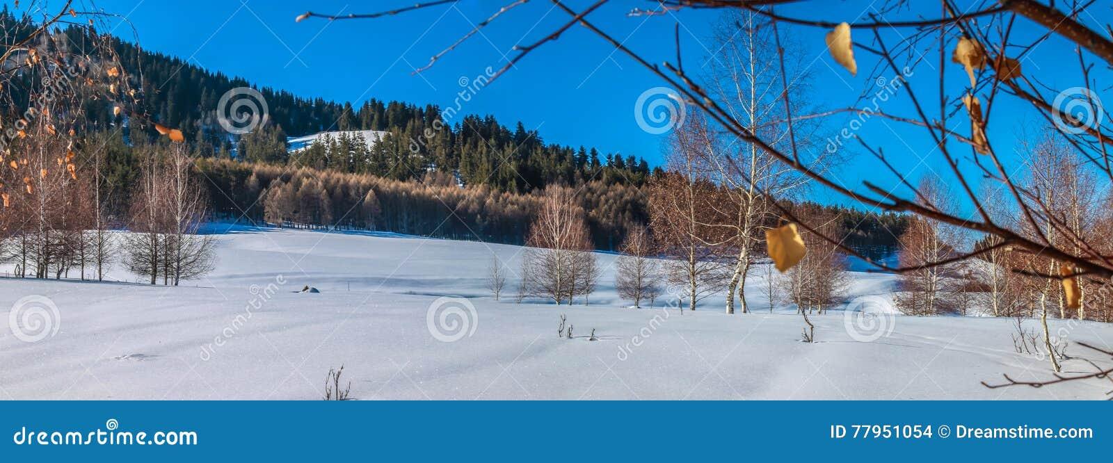De winterbosje