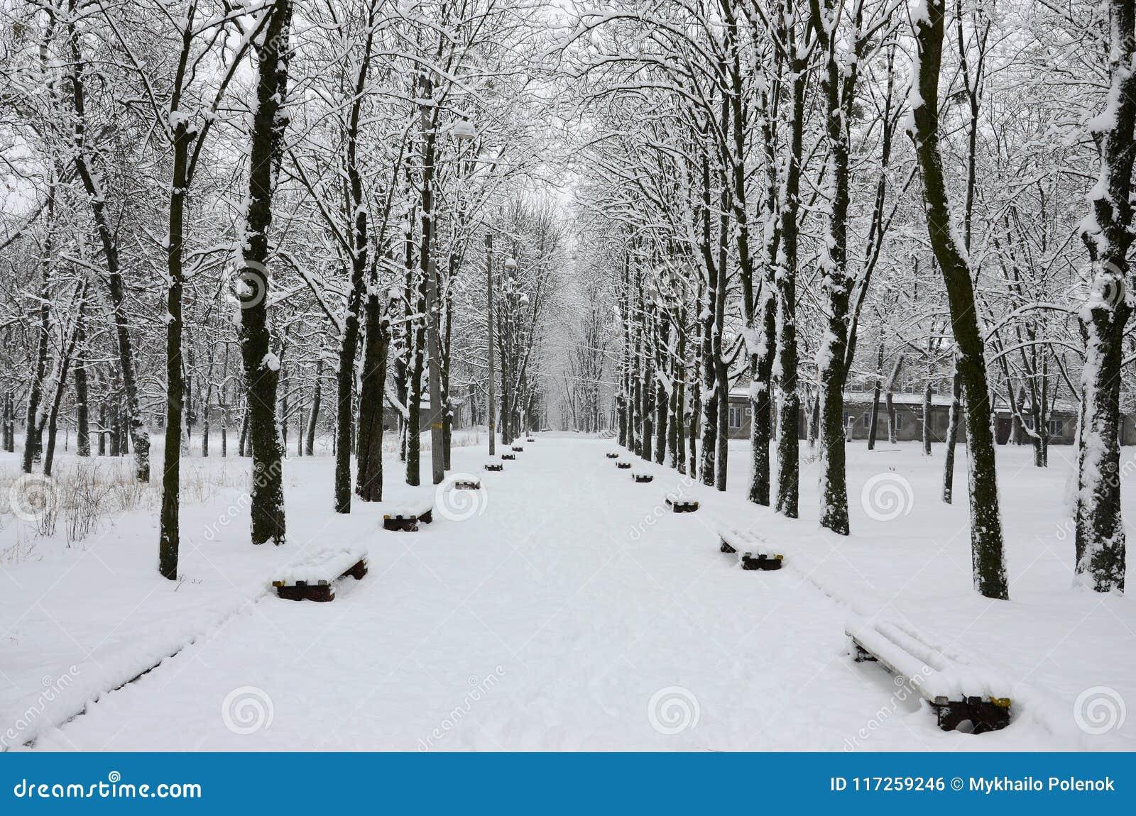 De winterlandschap in een snow-covered park na een zware natte sneeuwval Een dikke laag van sneeuw ligt op de takken van bomen