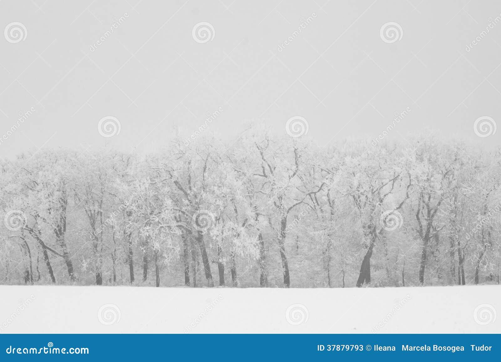 De winterlandschap in het bos