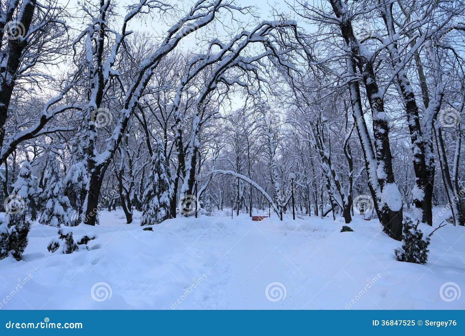 De winterlandschap met bomen en sneeuw
