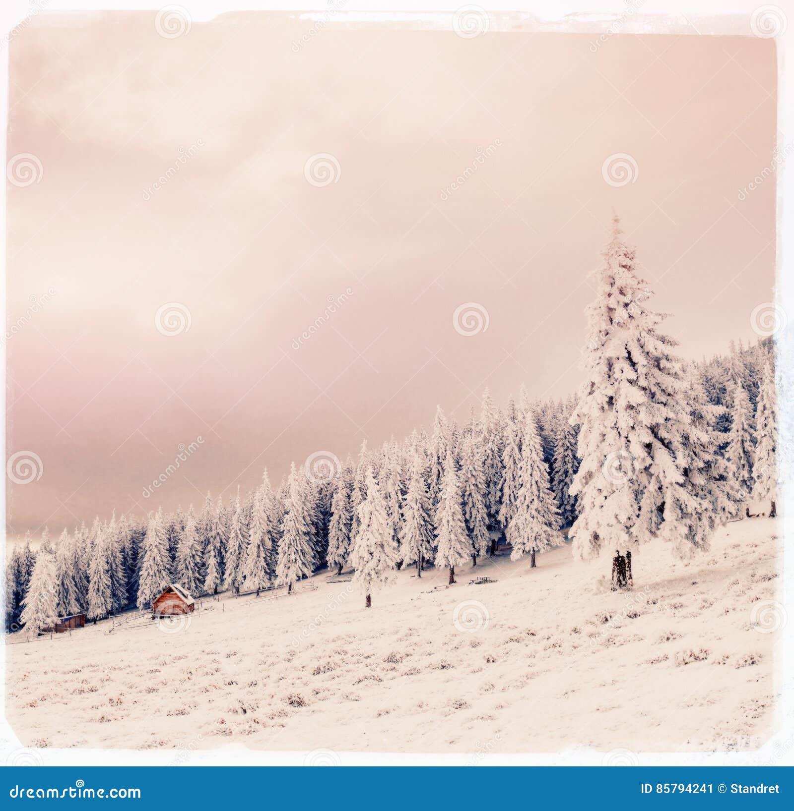 De winterlandschap met sneeuw in bergen de Karpaten, de Oekraïne vi