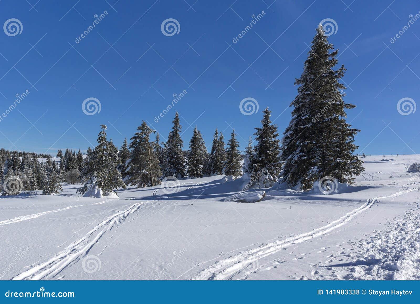 De winterlandschap van het gebied van Plateauplatoto bij Vitosha Berg, Sofia City Region, Bulgarije