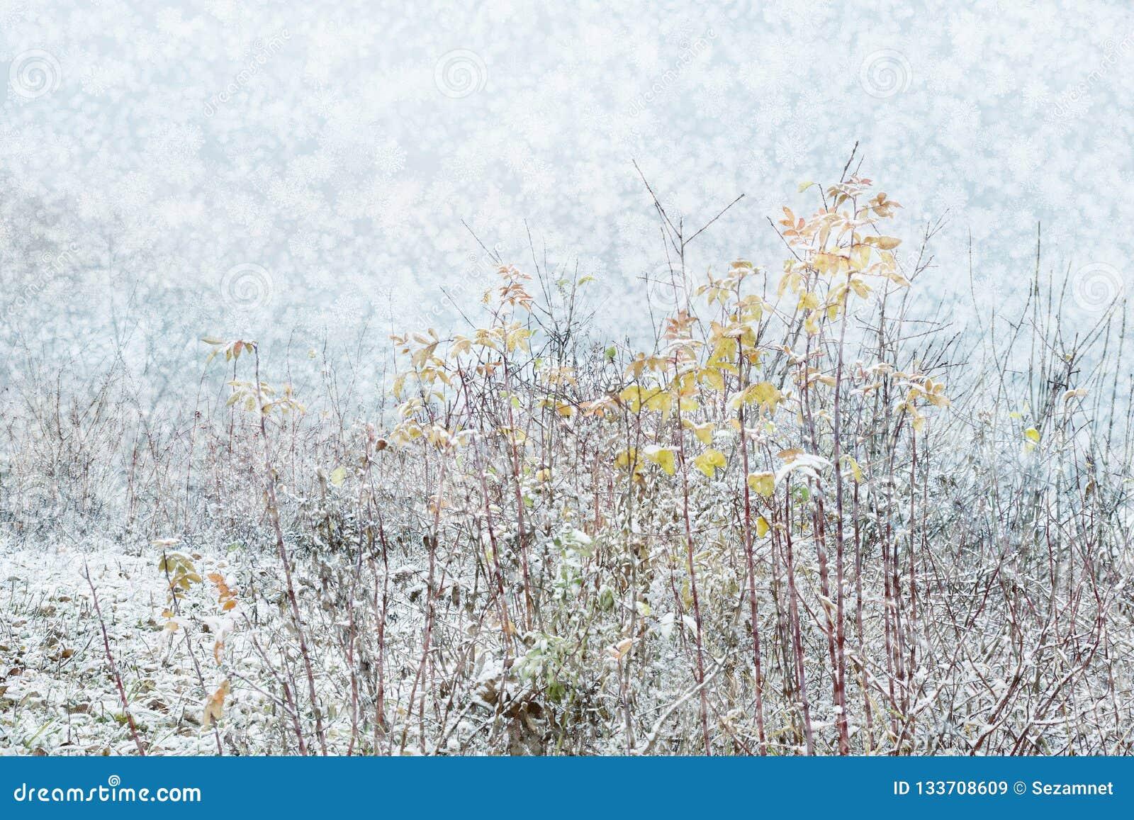 De winterlandschap van de sneeuwvalvakantie met dunne struiken van bomen in t