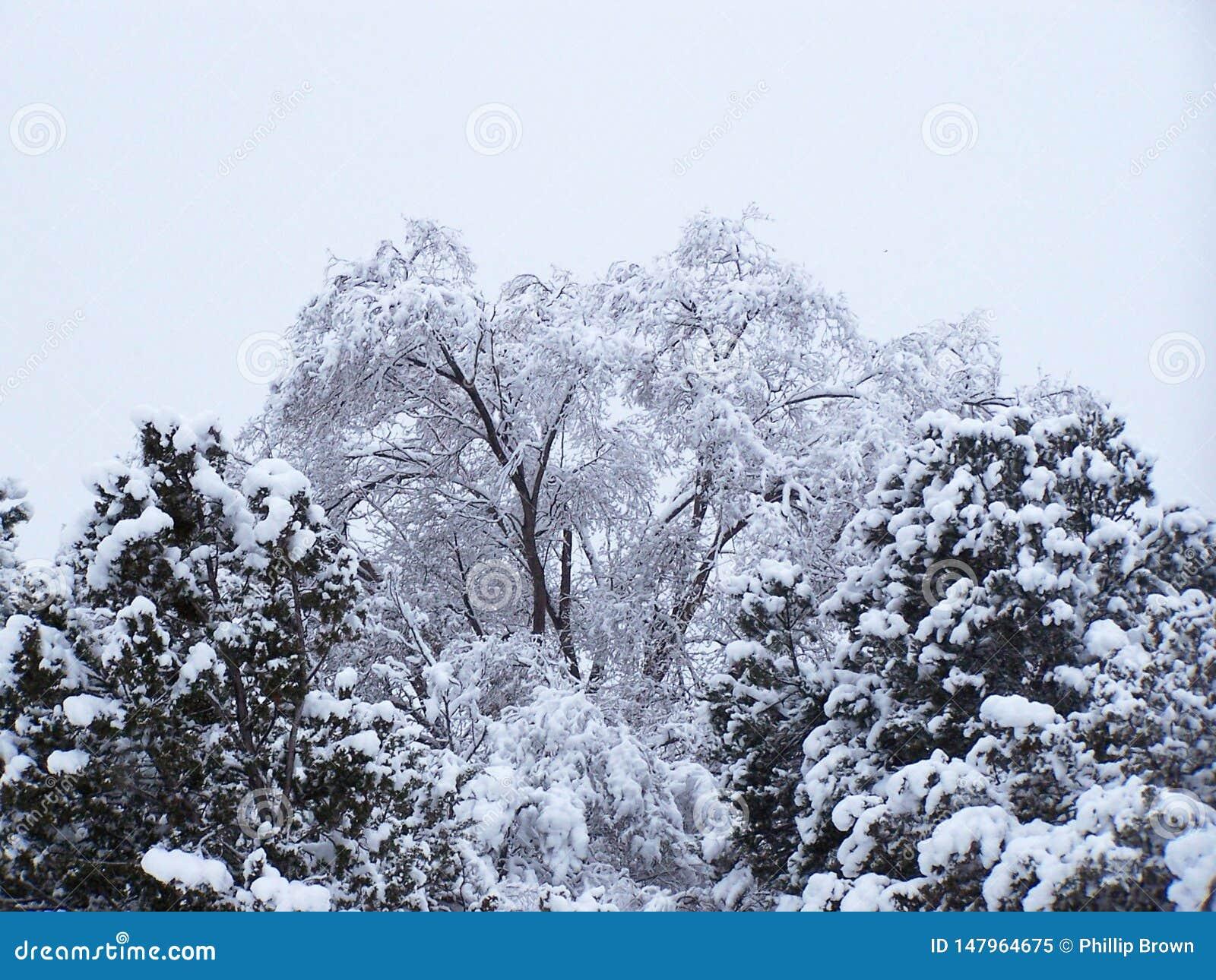 De wintersneeuw het wegen onderaan bomen in Santa Fe