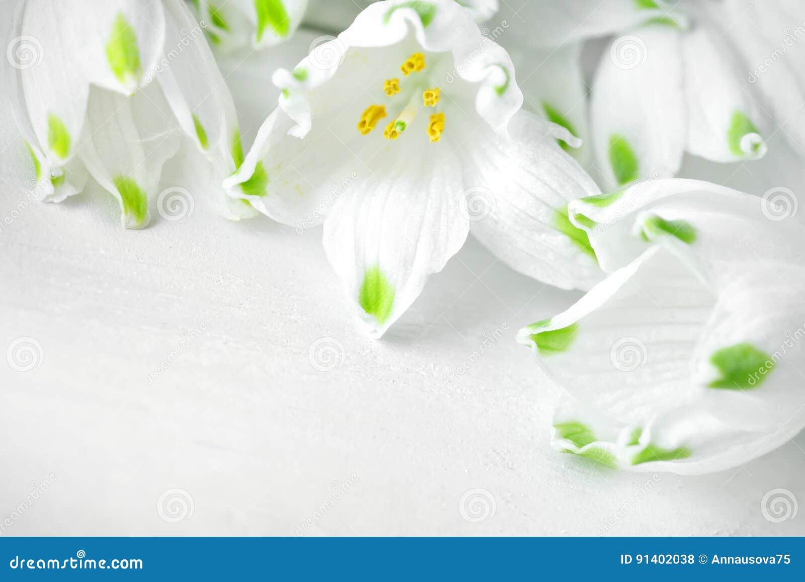 De witte bloemen van Loddon-Lelie liggen op witte houten raad