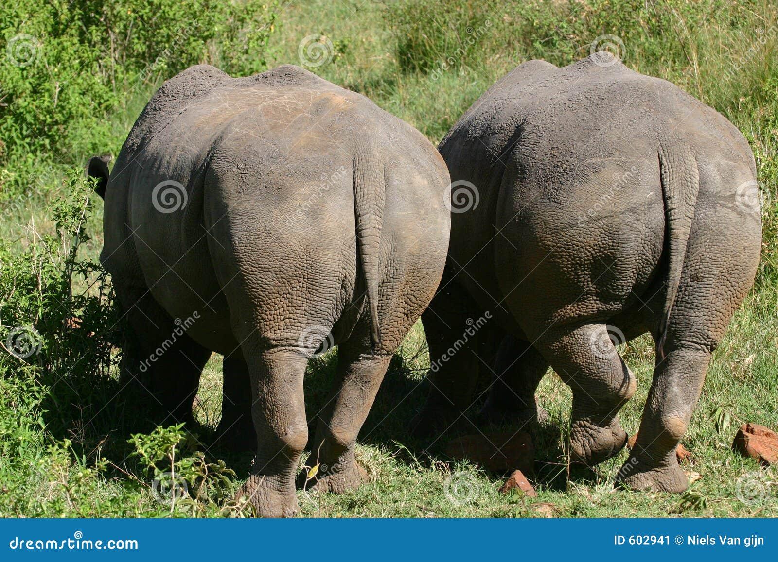 De witte bodems van de Rinoceros