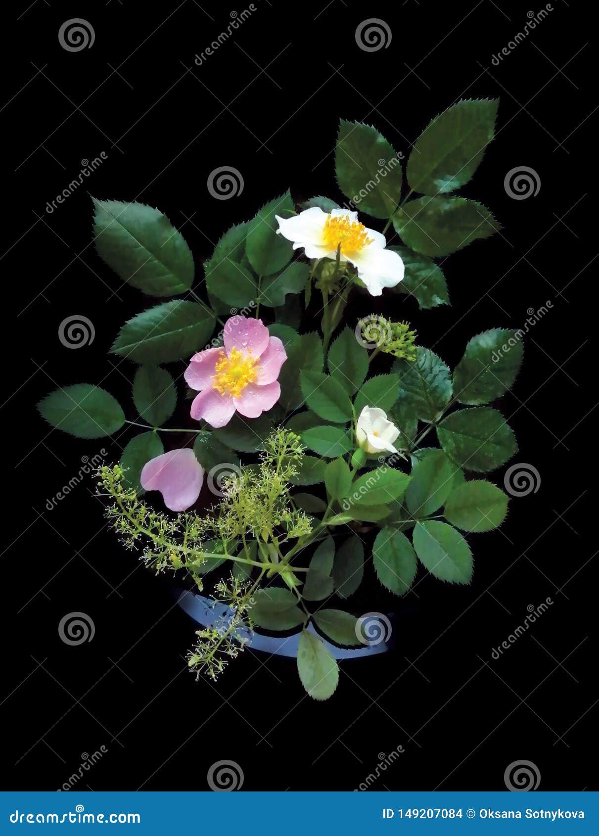 De witte en roze wilde bloemen, namen met greens op een zwarte achtergrond, decoratieve affiche toe