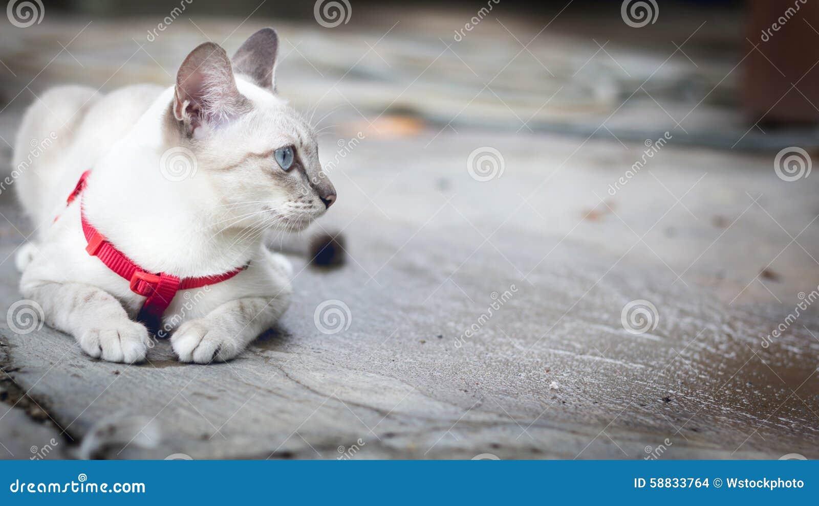 De witte kat die op de vloer hurken en ziet buiten eruit