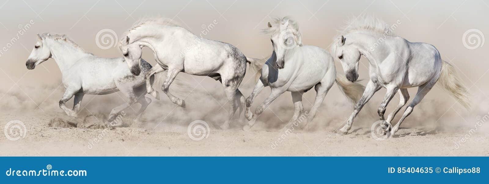 De witte looppas van de paardkudde
