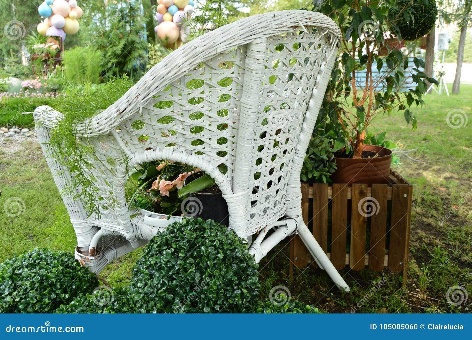 Witte Rieten Stoel : De witte rieten stoel in de tuin installaties in potten bevindt