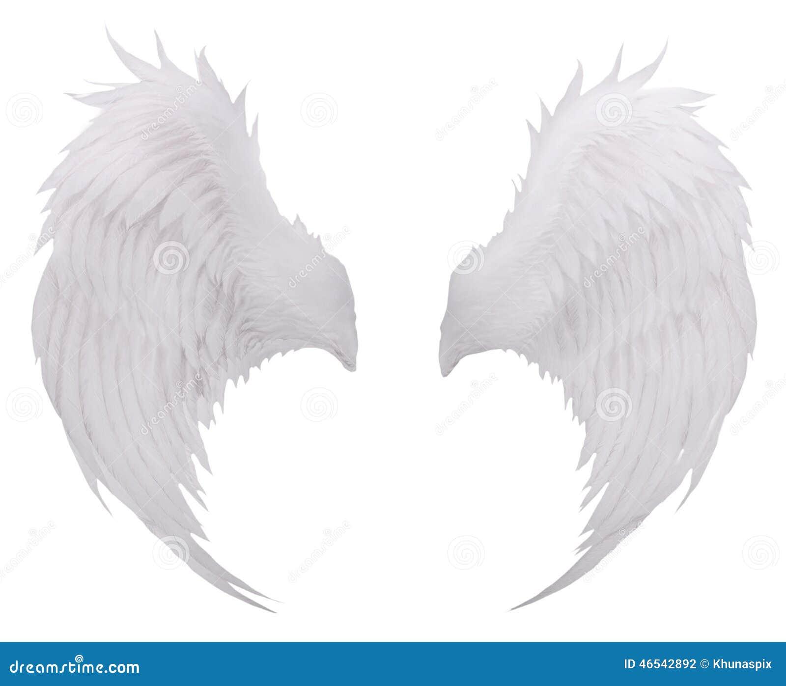 De witte veer van de vogelsvleugel, gevederte geïsoleerd wit gebruik als achtergrond F