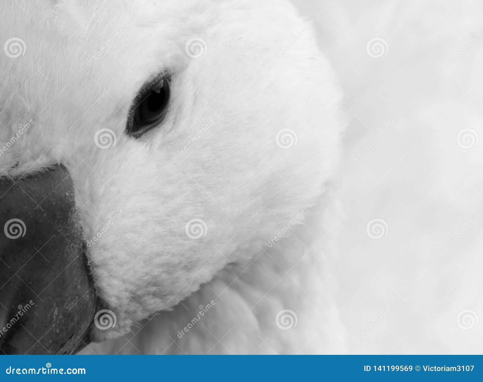 De witte vogel bekijkt u