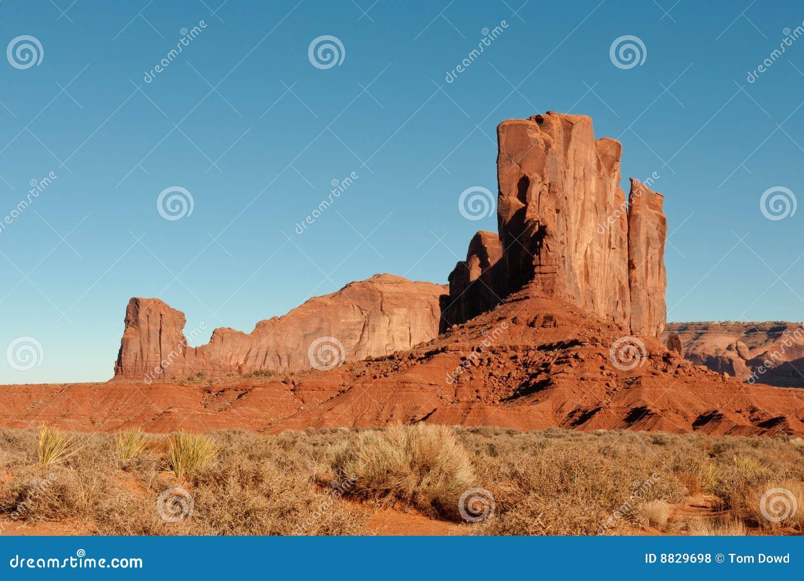 De woestijn van Arizona