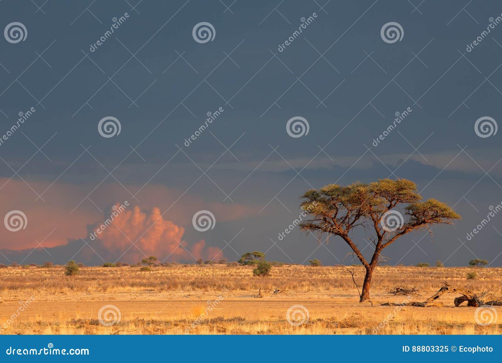 De woestijnlandschap van Kalahari