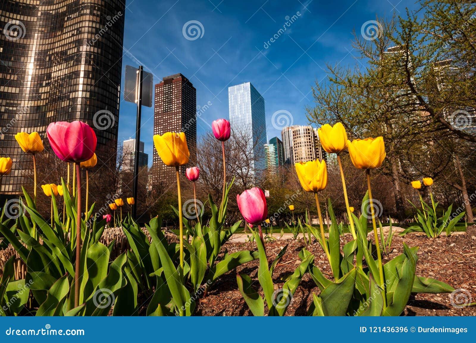 De wolkenkrabbers van Chicago in de lente