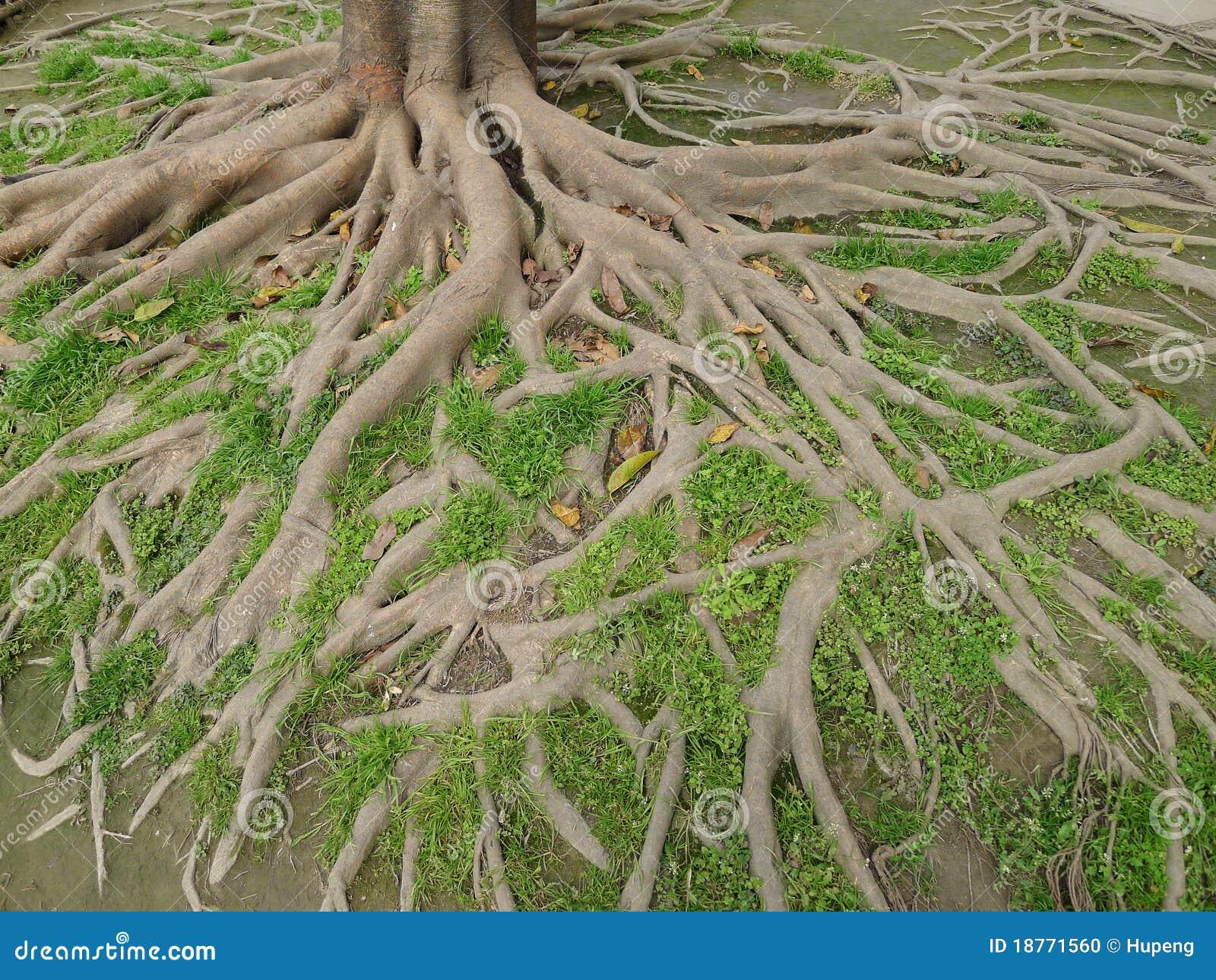 De wortels van de boom