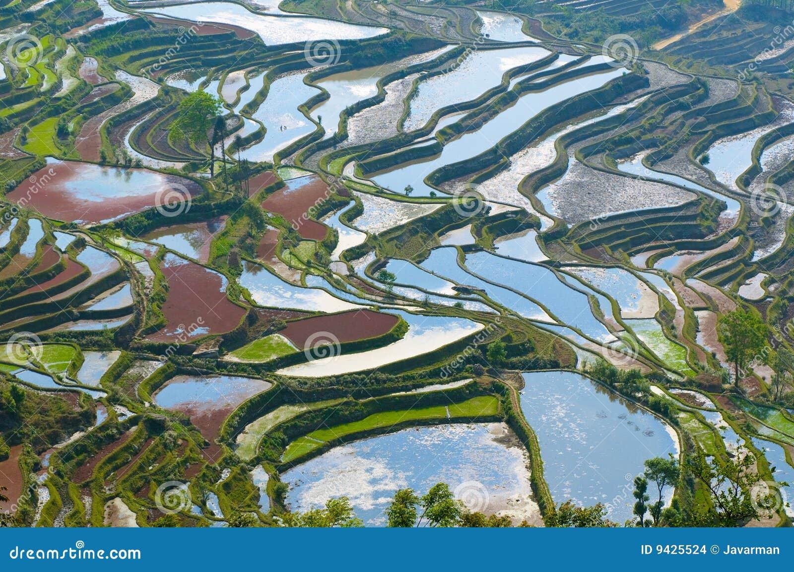 De yunnan terrassen van de rijst van yuanyang china stock foto afbeelding 9425524 - Afbeeldingen van terrassen verwachten ...