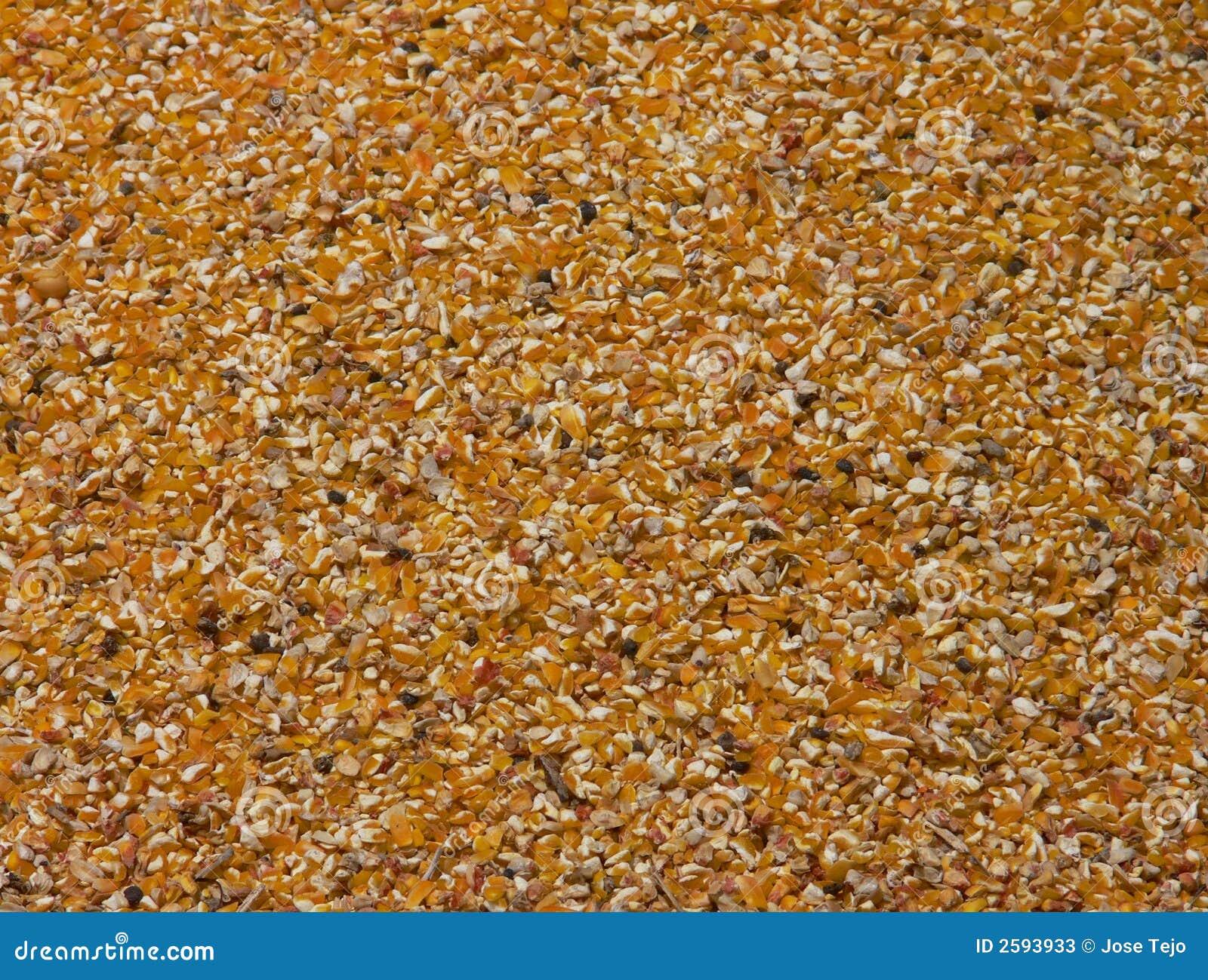 De zaden van het graan