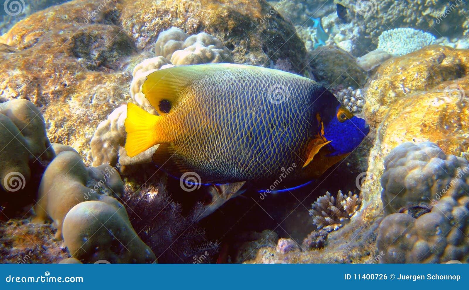 De zeeëngel van Blueface, Athuruga, de Maldiven