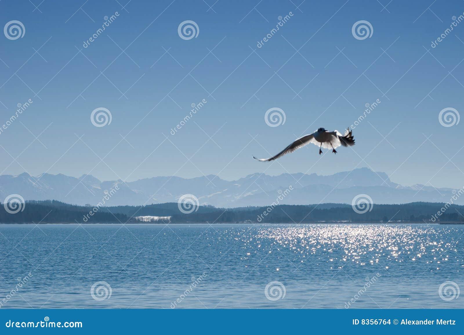 De zeemeeuw op meer Starnberger ziet in Beieren