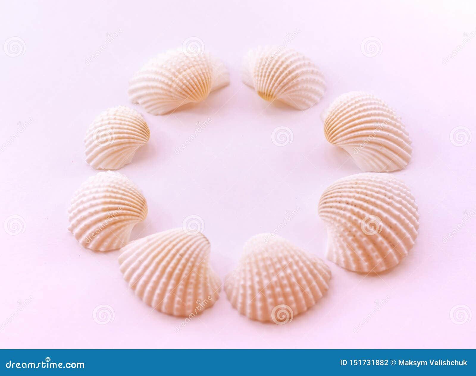 De zeeschelpen worden opgemaakt in een cirkel op een gevoelige roze achtergrond Vlak leg