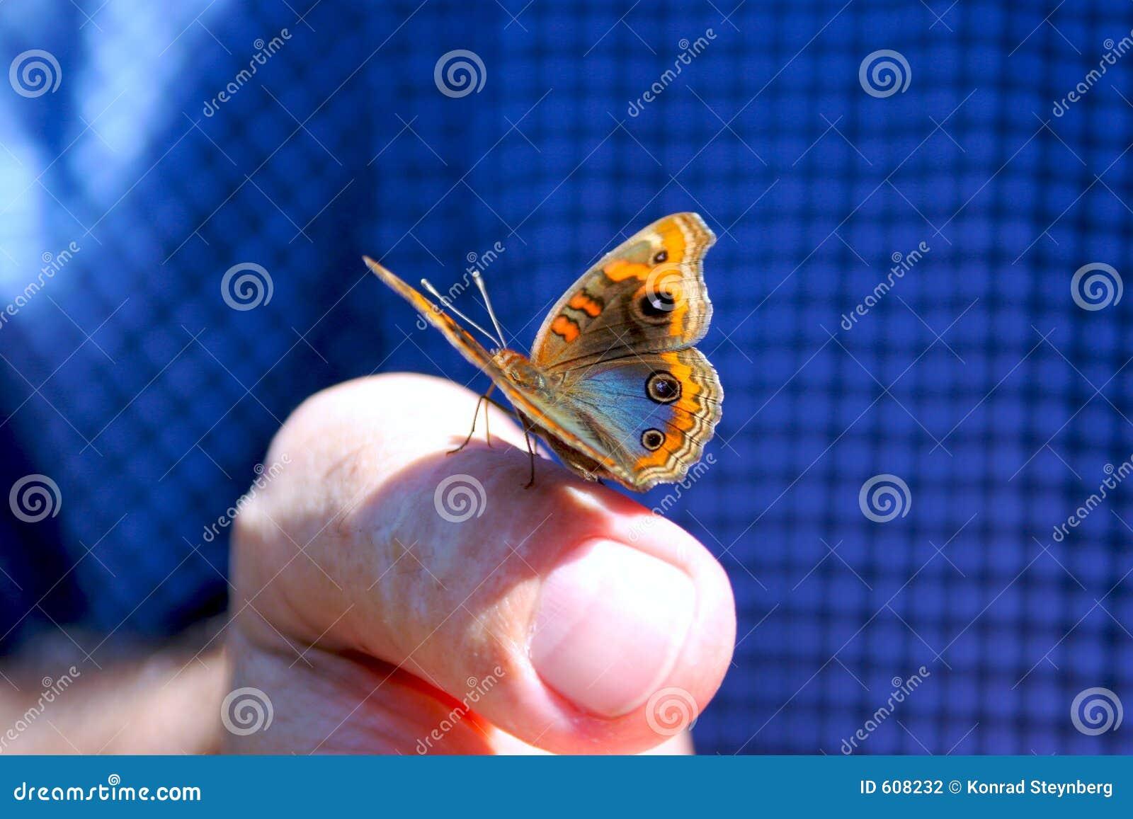 De zitting van de vlinder op vinger