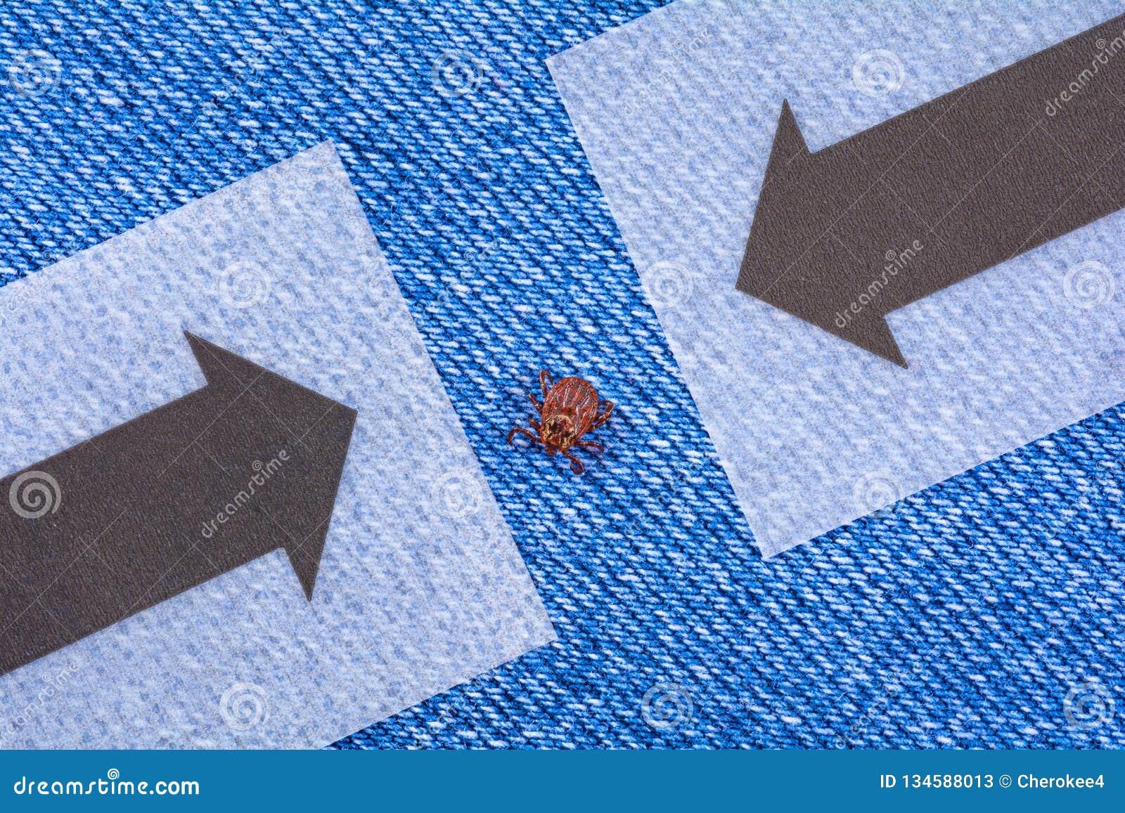 De zitting van de parasietmijt op jeans Gevaar van tikbeet