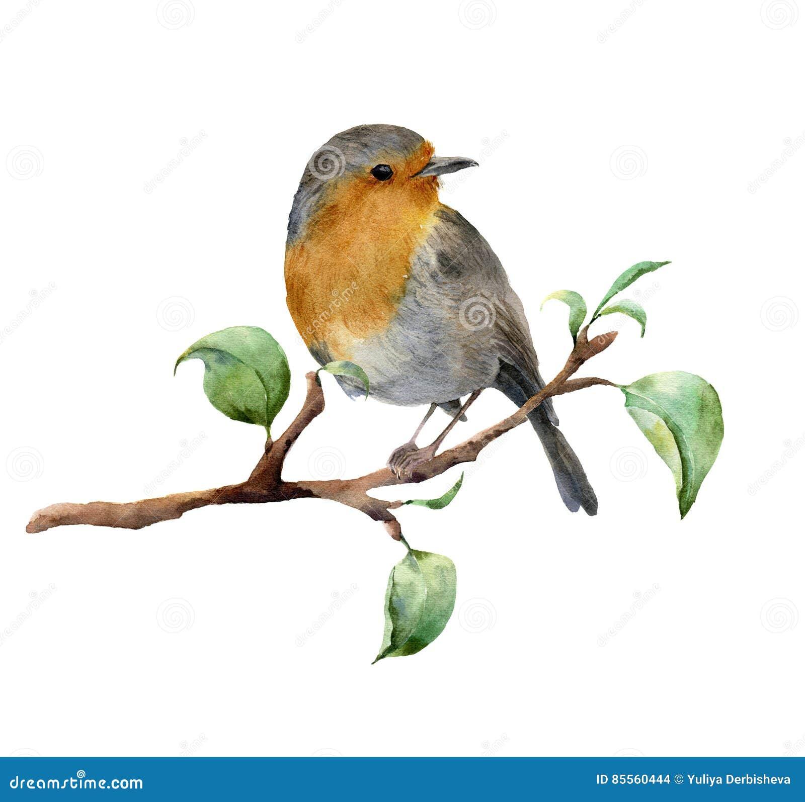 De zitting van waterverfrobin op boomtak met bladeren Hand geschilderde die de lenteillustratie met vogel op wit wordt geïsoleerd