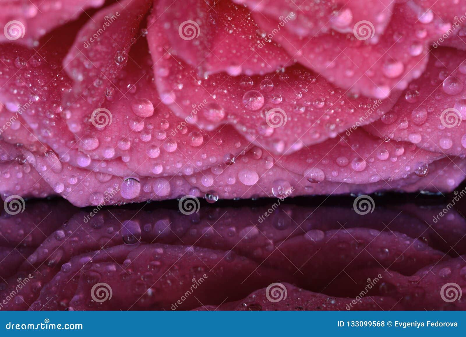 De zomer Rose Petals in Regendalingen