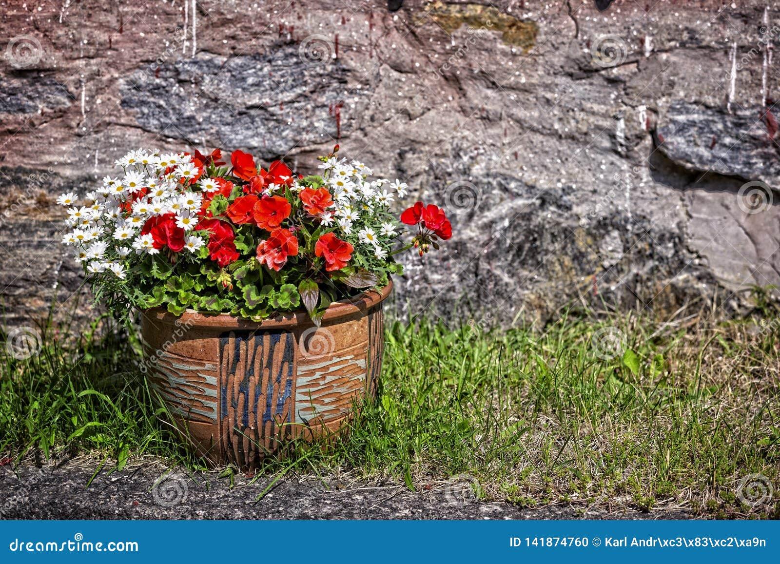 De zomerbloemen in een grote pot