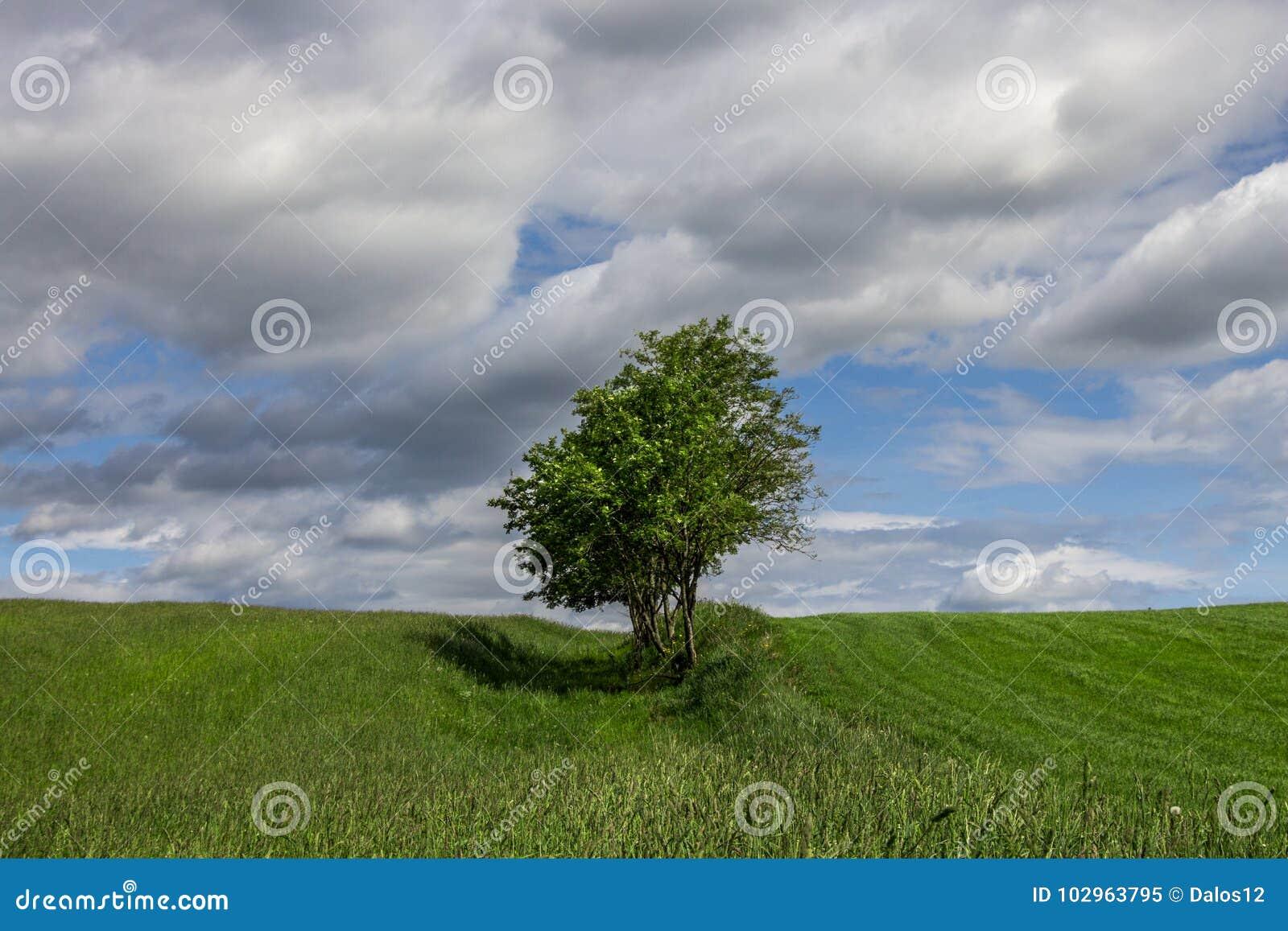 De zomerlandschap met een eenzame boom