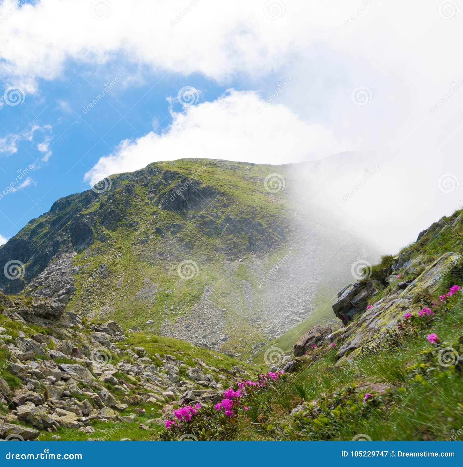 De zomerlandschap met rotsachtige bergen en mooie wilde bloemen in de ochtendmist