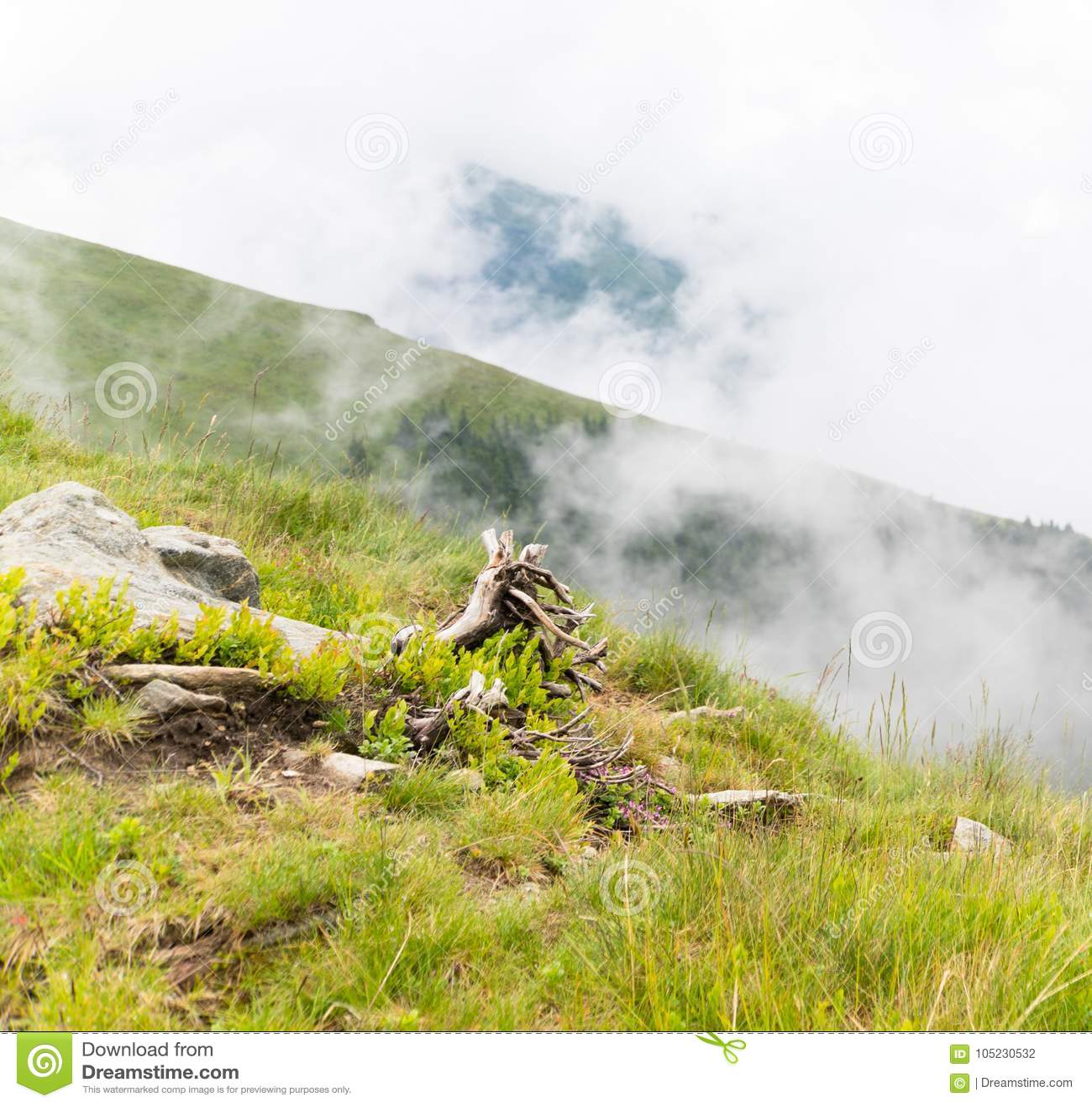 De zomerlandschap met rotsen en een gevallen boom in de ochtendmist