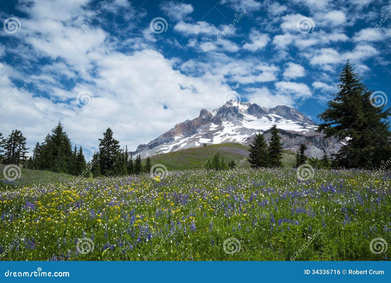 De zomerwildflowers op de hellingen van Onderstelkap, Oregon