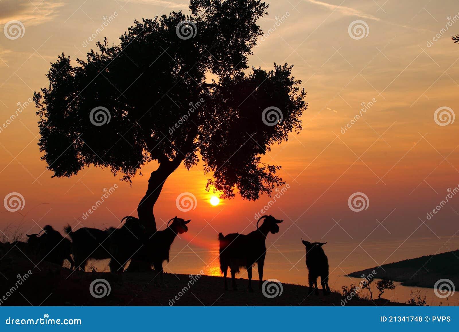 De Zon En De Geit Van Griekenland Van Thassos Royalty-vrije Stock Foto