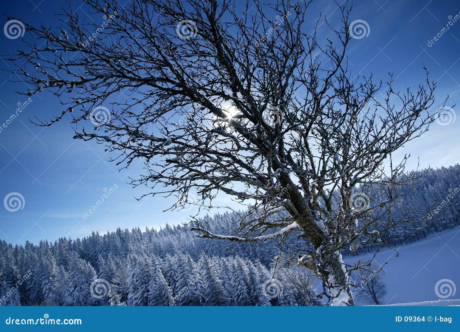 De zon van de winter achter brenches