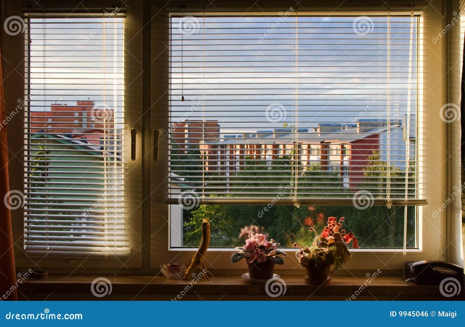 De zonneblinden van het venster