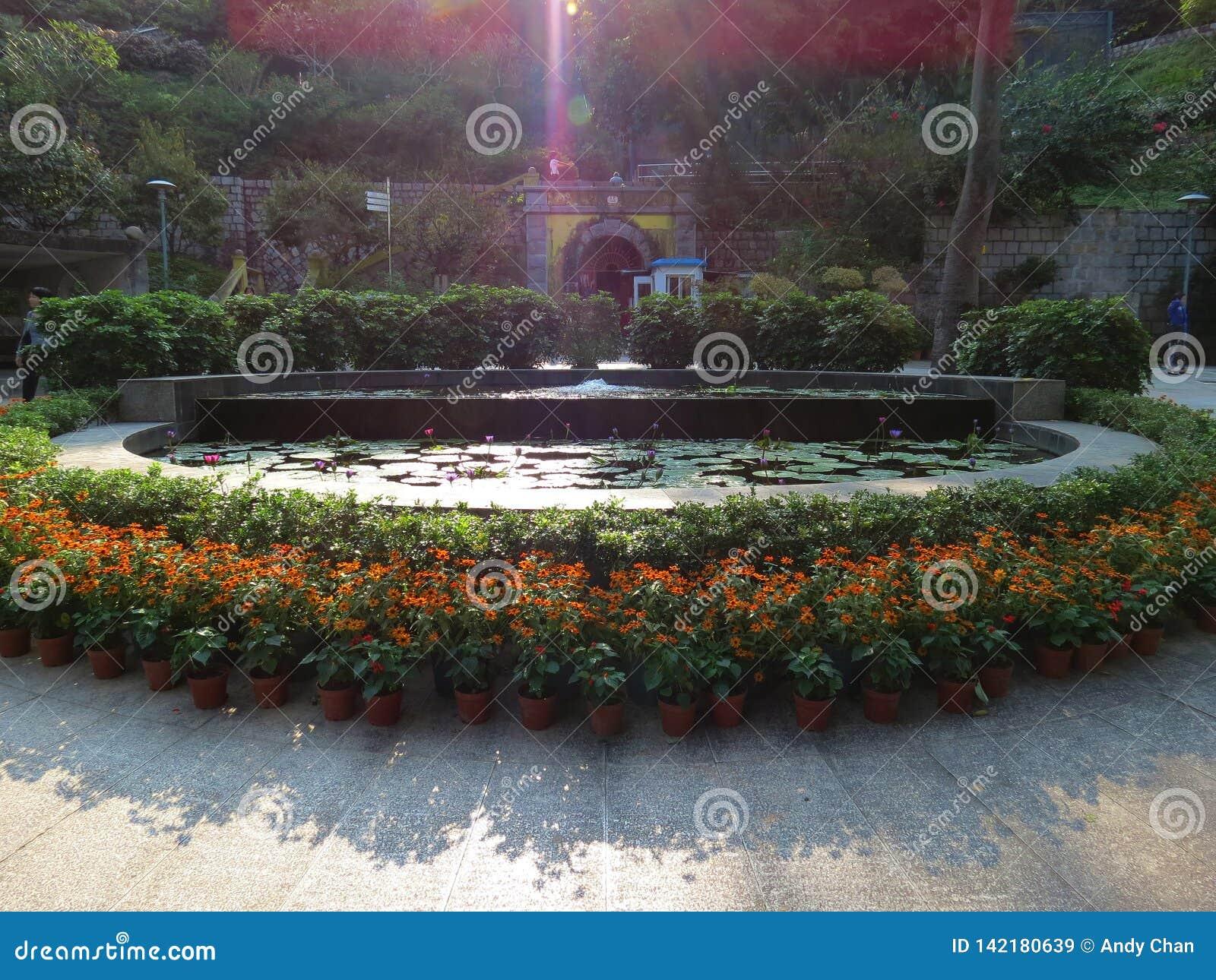 De zonnebloemen en de lotusbloem bloeien begroetende bezoekers bij de ingang van een lokaal park