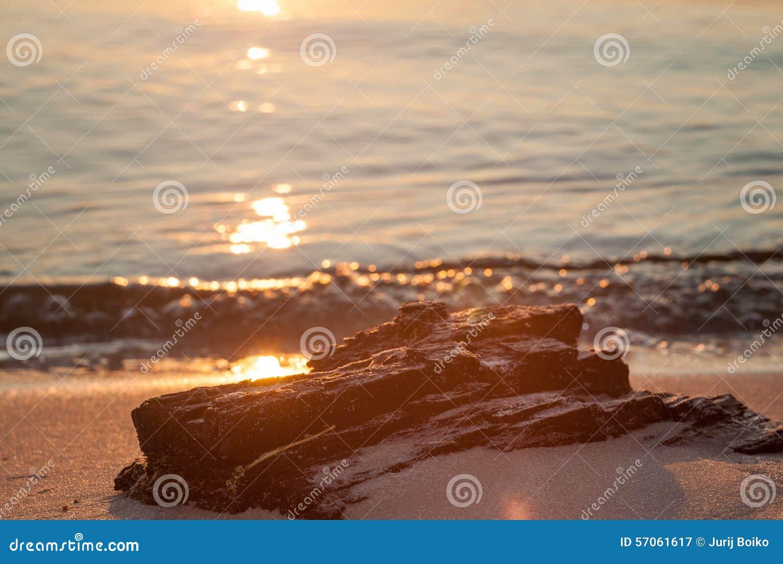 De zonsondergang Een deel van de boom op het strand