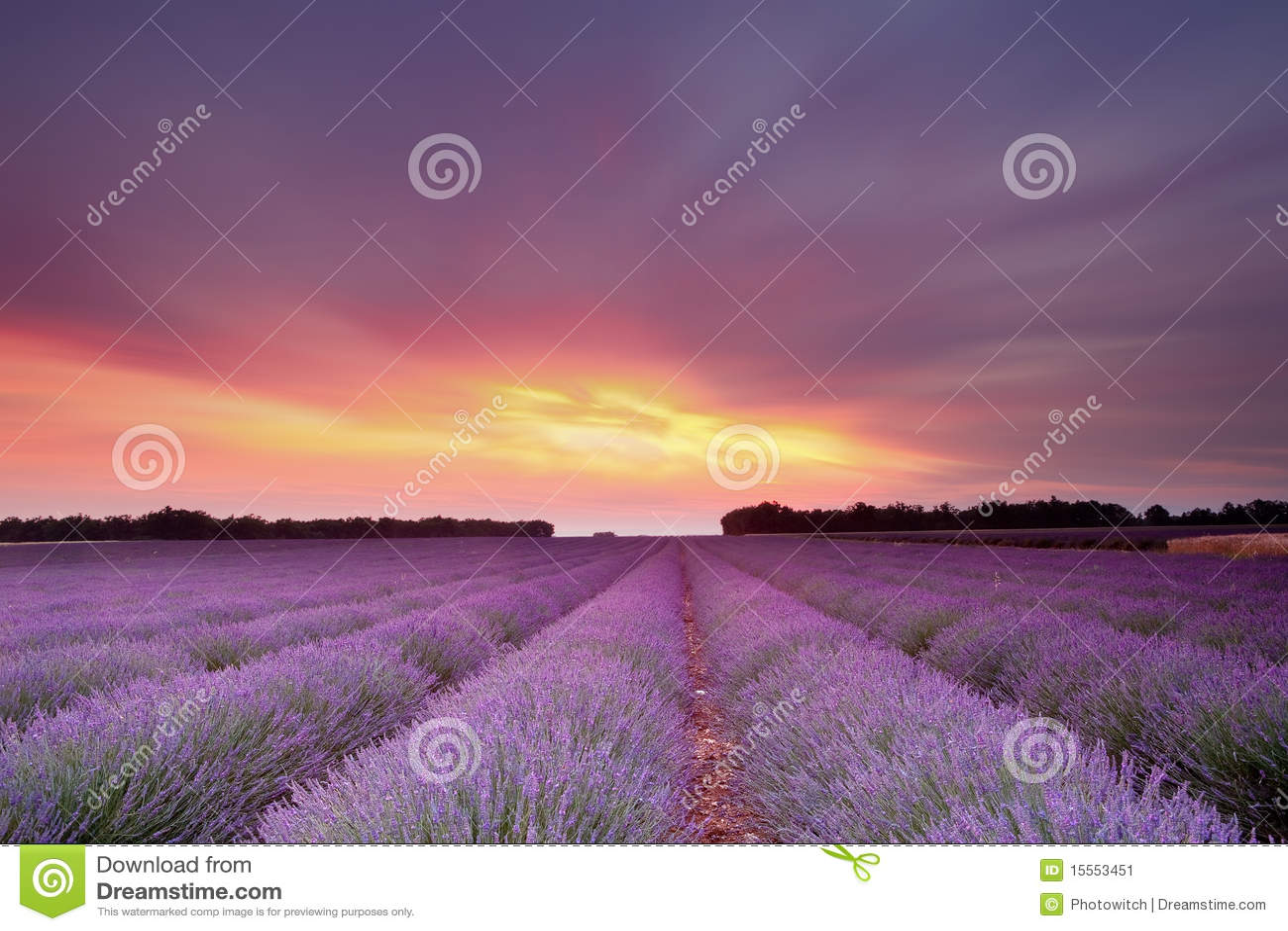 De zonsondergang van de lavendel
